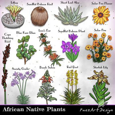 African Native Plants Clip Art {PaezArtDesign}