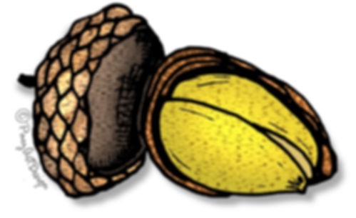 Prehistoric Era Clip Art Images | Foods: Gatherer Nuts & Seeds, Acorn | History & Science Graphics | PaezArtDesign Digital Art