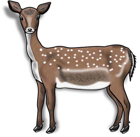 Prehistoric Era Clip Art Images | Food: Hunter, Deer | History & Science Graphics | PaezArtDesign Digital Art