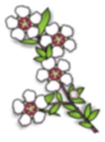 Tea Tree Flower | Australian Native Plant Clip Art Images | Leptospermum | Plant & Nature Graphics | PaezArtDesign