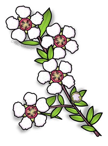Tea Tree Flower | Australian Native Plant Clip Art Images | Leptospermum | Plant & Nature Graphics | PaezArtDesign