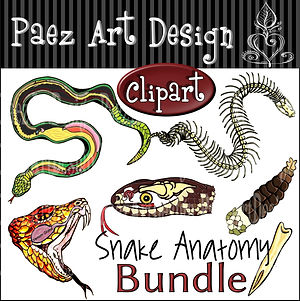 Snake Anatomy Clip Art BUNDLE {PaezArtDesign}