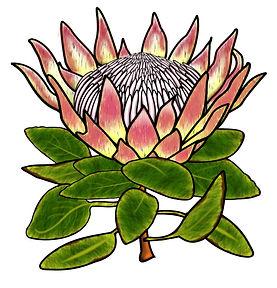 PaezArtDesgn Clip Art Illustrations | Plants Botany | Digital Art Graphics