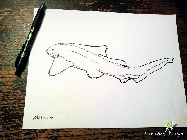 Zebra Shark Sketch