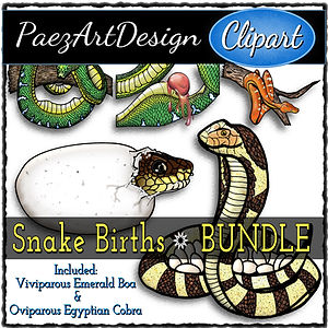 Snake Births Clip Art BUNDLE {PaezArtDesign}