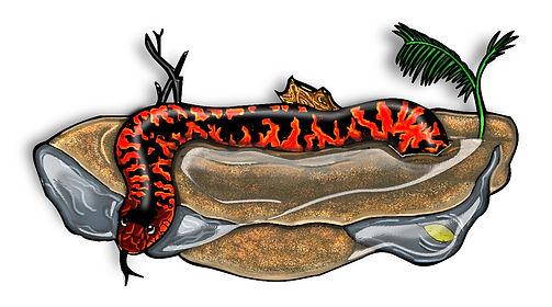 Australian Collet's Snake Clip Art {PaezArtDesign}