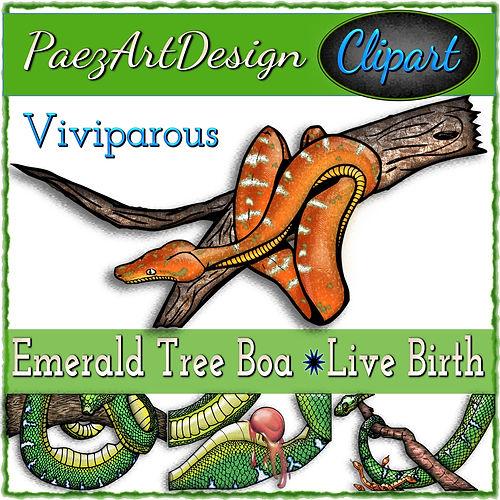Emerald Boa-Live Birth Clip Art {PaezArtDesign}