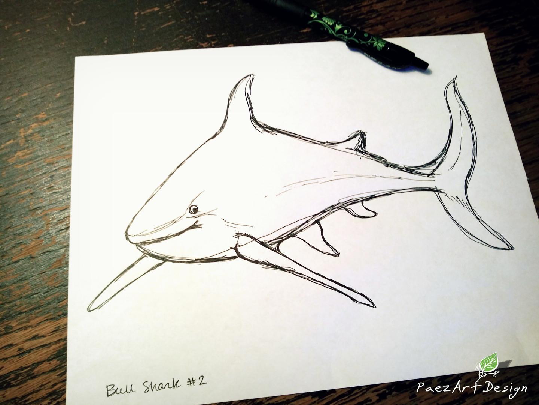 Bull Shark Sketch