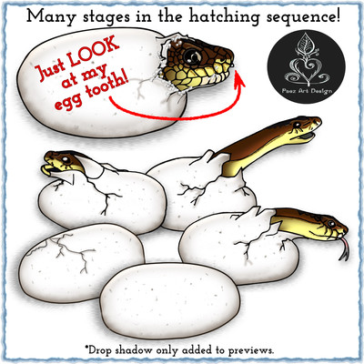 Egyptian Cobra Egg Birth Clip Art {PaezArtDesign}