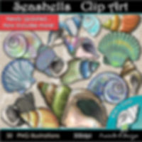 Seashells Clip Art Illustrations   Animal, Nature, Seasonal, Summer Graphics   PaezArtDesign Digital Art Images