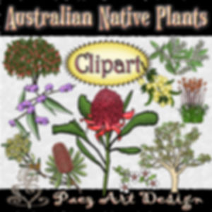 Australian Native Plant Clip Art Images | Plant & Nature Graphics | PaezArtDesign Digital Art