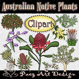 Australian Native Plant Clip Art Images | Plant & Nature Graphics | PaezArtDesign Digital Art