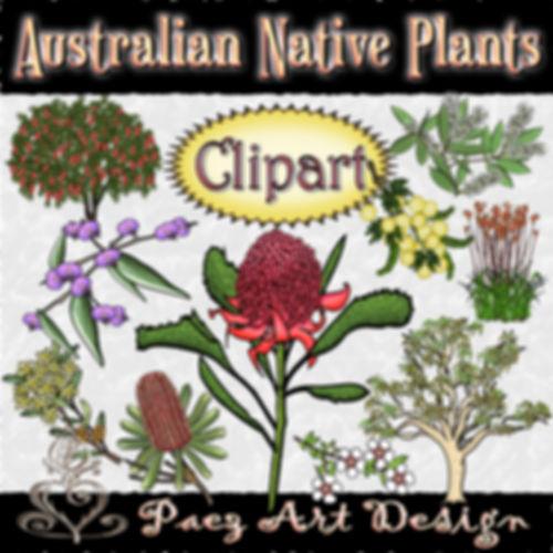 Australian Native Plants | Clip Art Images | Plant & Nature Graphics | PaezArtDesign Digital Art