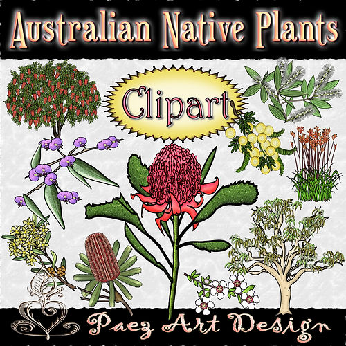 Australian Native Plants | Clip Art Images | Plant & Nature Graphics | PaezArtDesign Digital Art