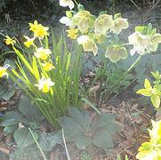 Stibbard spring flowers.jpeg