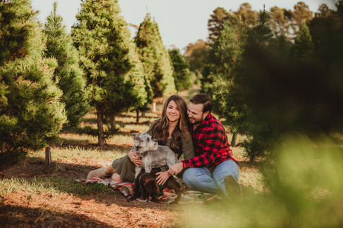 Couple Sitting in Between Trees