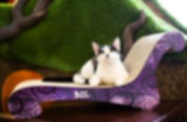 Oskar's Dreamboy Lounger by 3 Fat Cats