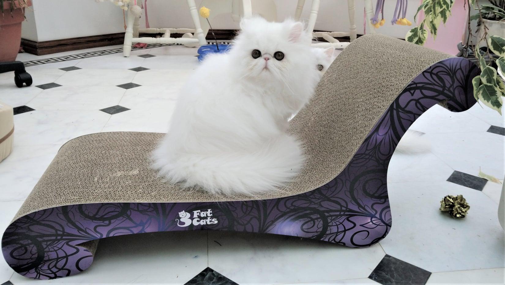 Cat Scratch Furniture | 3 Fat Cats