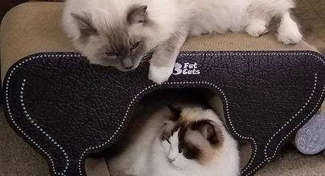 Teddy & Reggie on the Duplicat.jpg