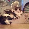 Cat Scratch Furniture from 3 Fat Cats in the news!