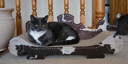 Ellie from 3 Fat Cats cat scratch furniture