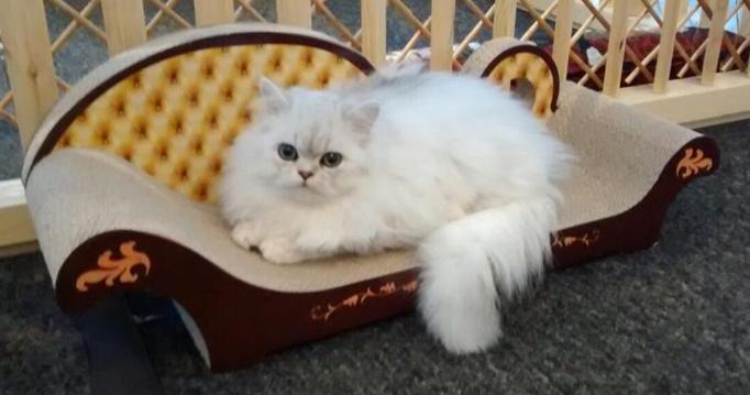 Scratch Furniture | 3 Fat Cats