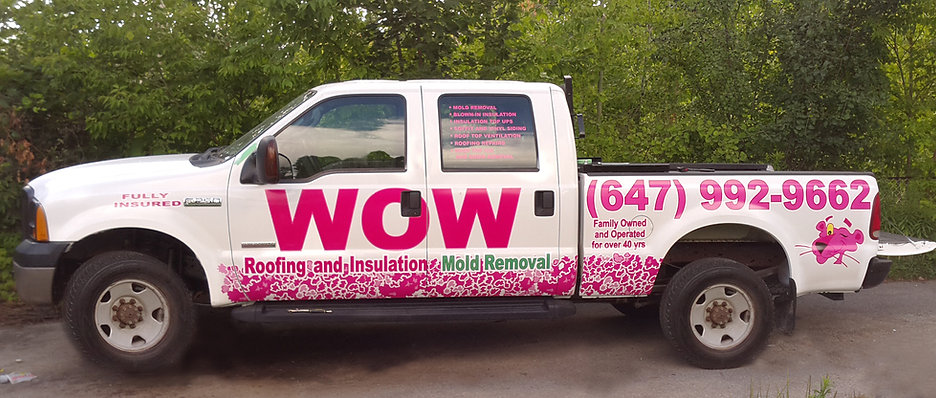 Mold Removal and Remediation.