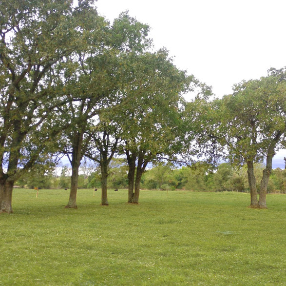 Covenant Country Oaks