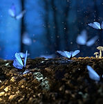 butterfly-2049567_1920.jpg