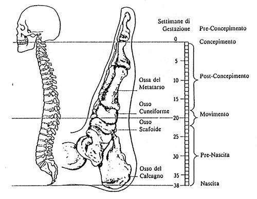 è un trattamento mirato alla colonna vertebrale che si trova nei piedi, nelle mani, sulla testa per sciogliere i traumi subiti durante la gestazione
