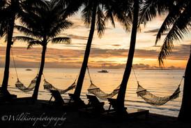 ヤシの木とハンモック ボホール島、フィリピン