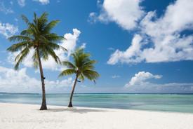 ヤシの木 サイパン島
