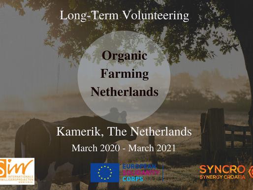 LONG-TERM VOLUNTEERING (ESC) │KAMERIK, THE NETHERLANDS 🇳🇱 │ORGANIC FARMING NETHERLANDS