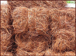 pinestaw.jpg