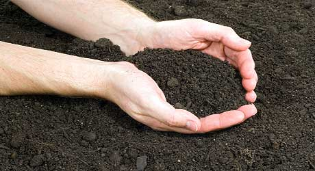Bulk Top Soil and Compost