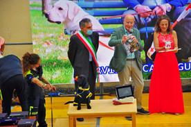 SERVIZIO CANI GUIDA DEI LIONS con il Presidente Giovanni Fossati  Il cucciolo TESLA con l'istruttrice Serena Pozzoli