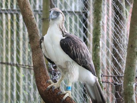 OmniPay Adopts Philippine Eagle Gavra Maslog