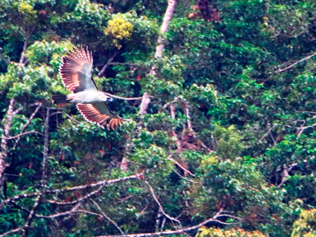 A New Family of Philippine Eagles Spotted in the Wild