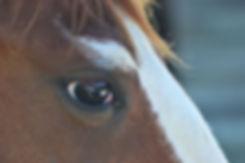 Snickers eye.jpg