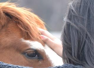 Horse Wisdom Yoga