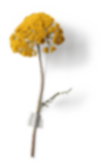 flor amarela.png