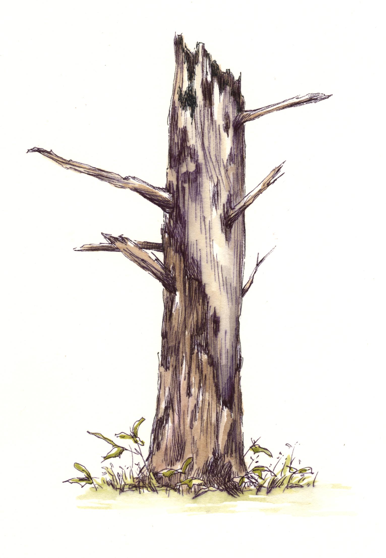 Snag Tree