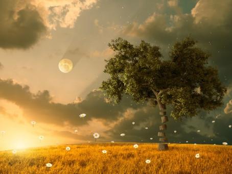 Daytime Dream Yoga