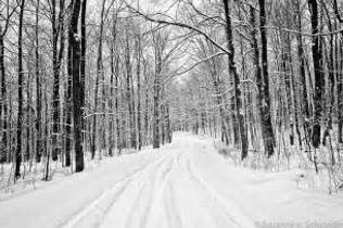 snow tracks 2.jpg