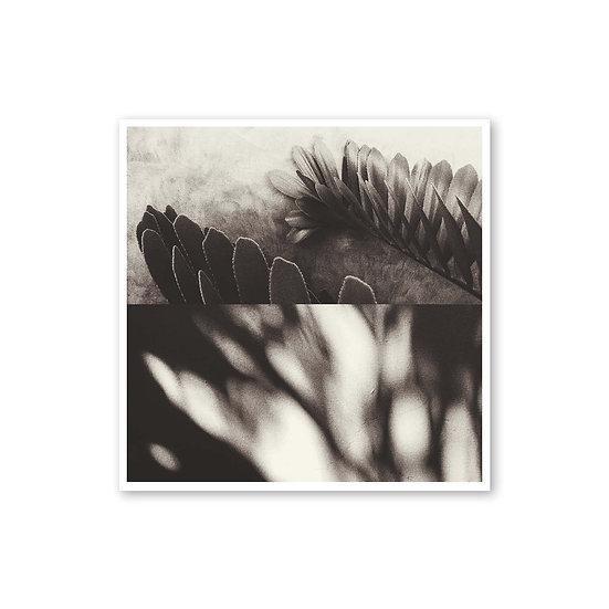 Distracción del pensamiento - Jimena Horta
