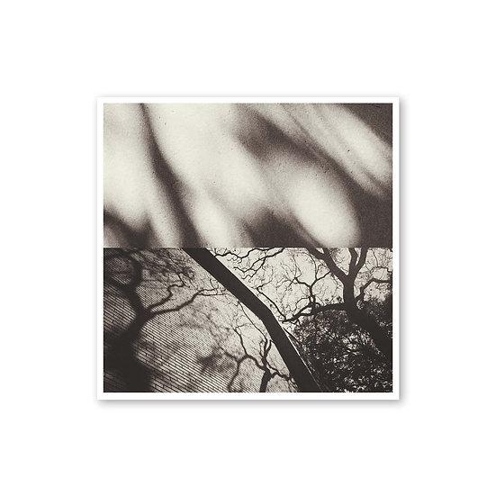 Distorsión de una realidad - Jimena Horta