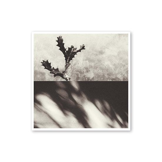 Falsa expectativa - Jimena Horta