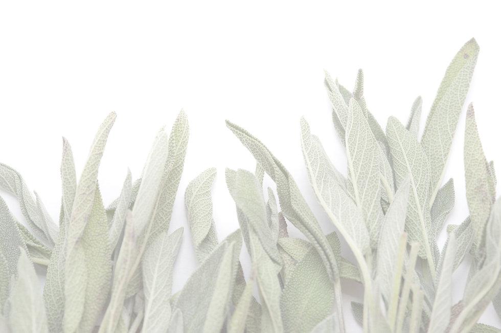 sage_leaves_on_white_edited.jpg
