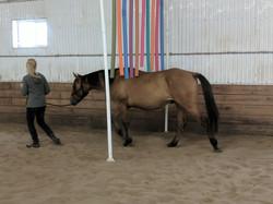 Training colts