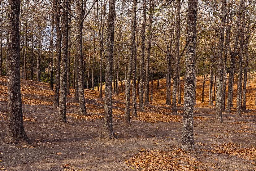 Autumn Mbona